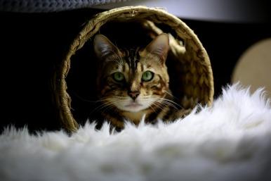 cat-3919052_1920